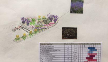 Massif de plantes résistantes à la sécheresse avec calendrier de floraison